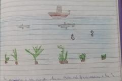 14_4C Lipari centro_Posidonia oceanica_DAD 12 maggio 2020