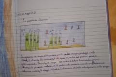 15_4C Lipari centro_Posidonia oceanica_DAD 12 maggio 2020