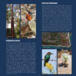 brochure halykos_002