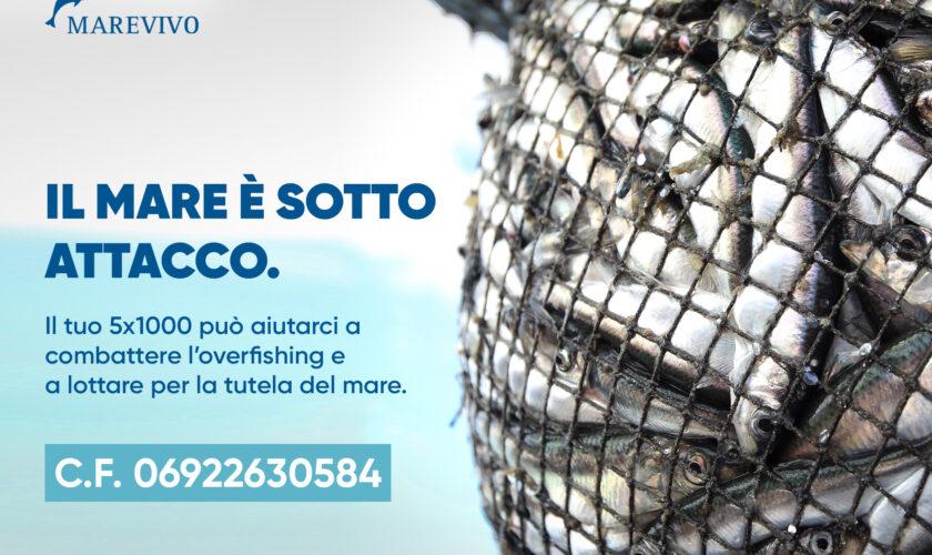 5x1000 pesci