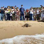 foto liberazione tartaruga